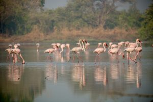 Nature Flamingo point, Nerul